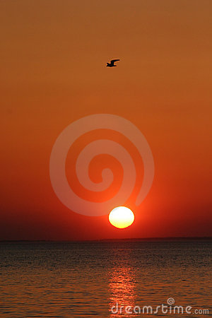 Free Bird Over Sunset Stock Images - 3145084