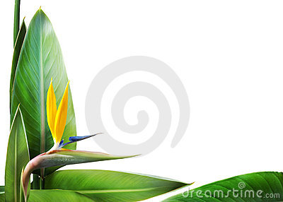 Bird of paradise floral frame
