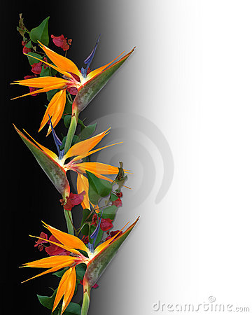 Bird of Paradise Tropical Flowers Border
