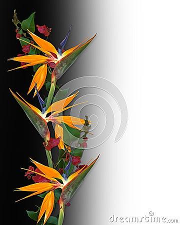 bird of paradise tropical flowers border royalty free