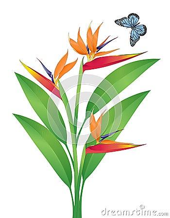 Bird Of Paradise Vector Art