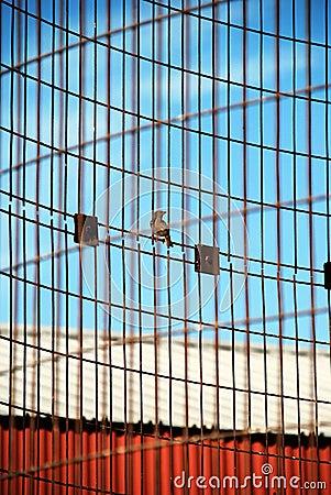 Bird perched on corn crib