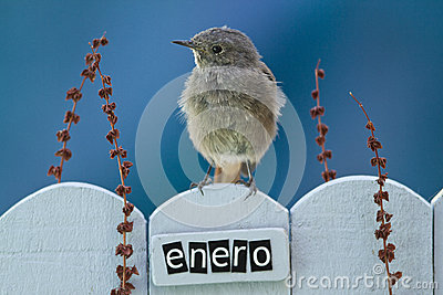 Bird perched on a January decorated fence