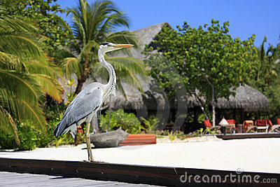 Bird Posing in Maldives