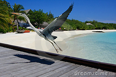 Bird Posing in Maldives