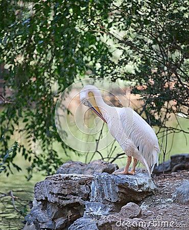 Bird preening
