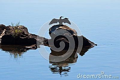 Bird Profile Iguassu River Argentina