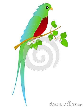 Bird - Quetzal