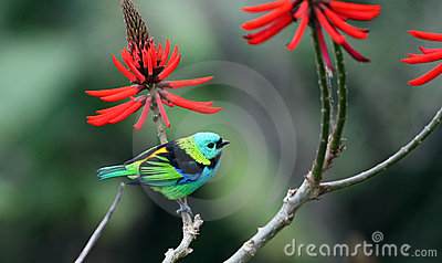 Bird and red flower