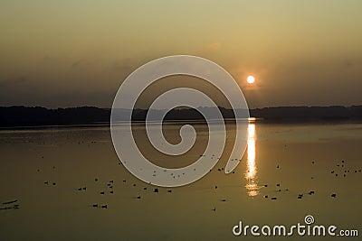 Bird reserve by sunrise