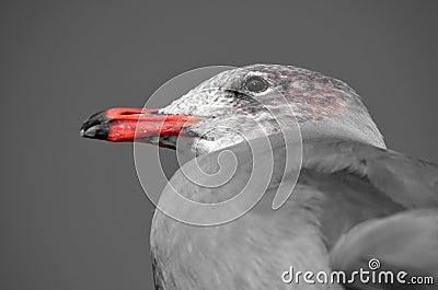 Bird `s Dignity