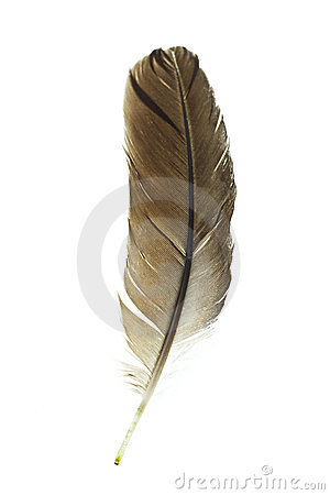 Bird s feather