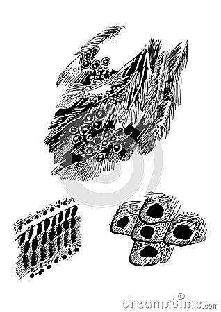 Bird s feathers