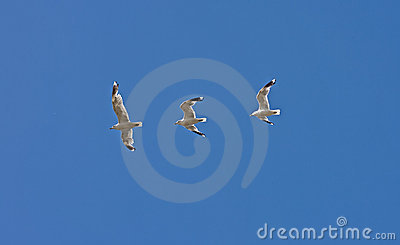 Bird s flight captured in three shots - albatross