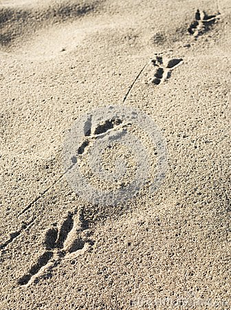 Bird s footprint