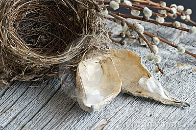 Bird s Nest Still Life