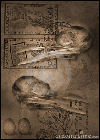 Free Bird Scull Beak Royalty Free Stock Image - 451576
