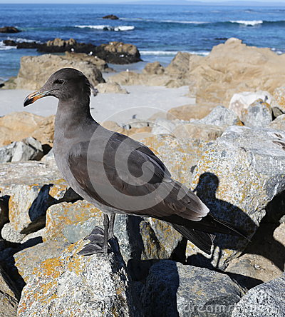 Bird at sea side