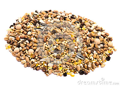 Bird Seed on White