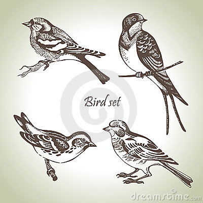 Free Bird Set Royalty Free Stock Image - 23867456