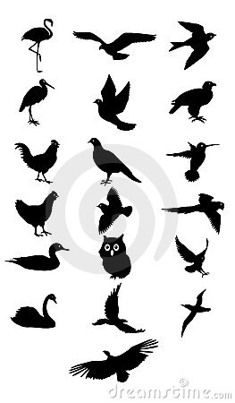 Free Bird Silhouette Royalty Free Stock Images - 5905909