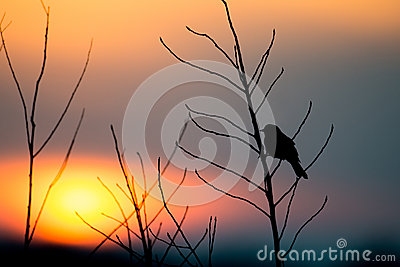 Bird silhouette at sunset