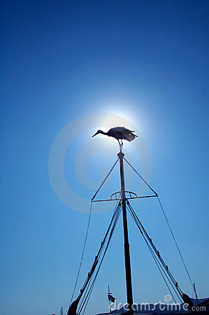 Bird silhouetted on mast