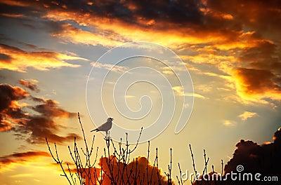 Bird singing at sunset