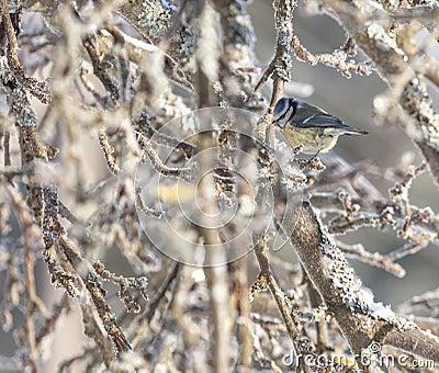 Bird sitting`on a branch
