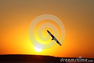 Bird and the sun