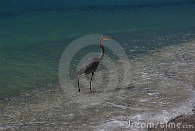 Bird in surf on beach