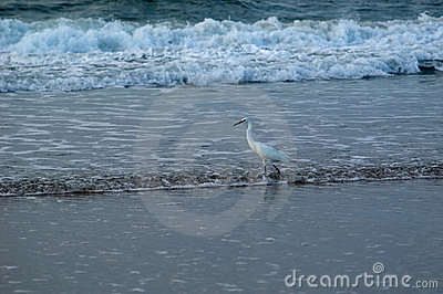 Bird surf fishing