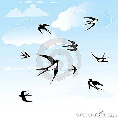 Bird swallow set.