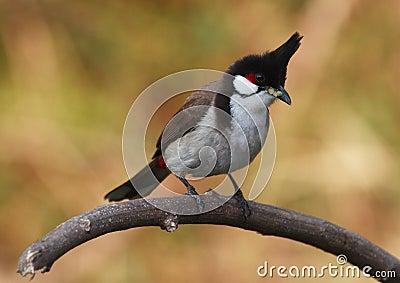 Bird on tree branch. 62-7