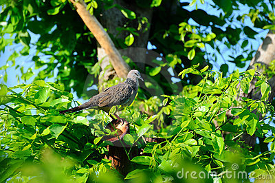 Bird in verdant bush