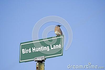 Bird What?