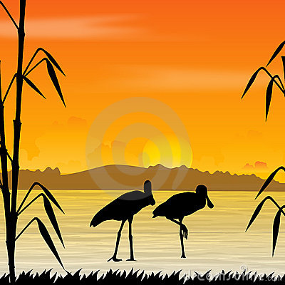 Bird, wildlife