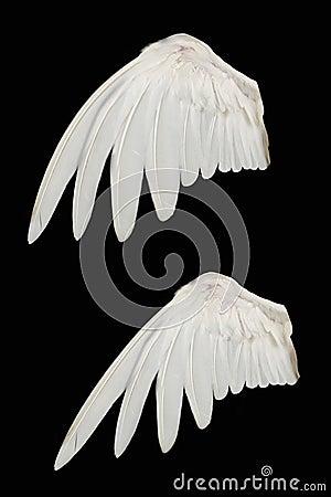 Free Bird Wing Stock Photo - 8908430