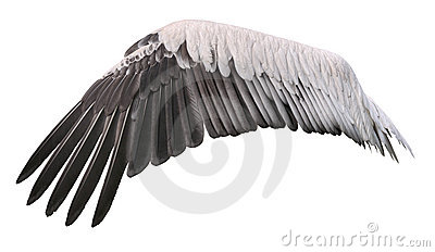 Bird wing cutout