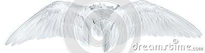 Bird wings white