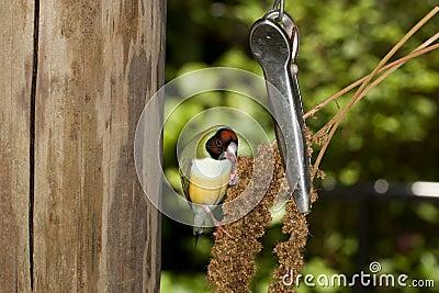Birdfeeder at work