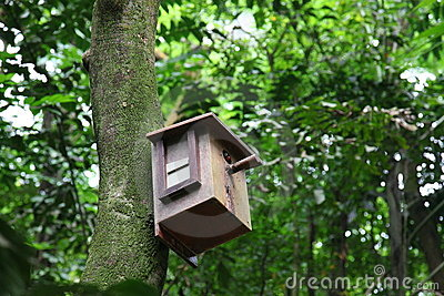 Birdhouse with bird inside
