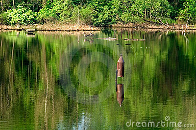Birdhouse in Lake