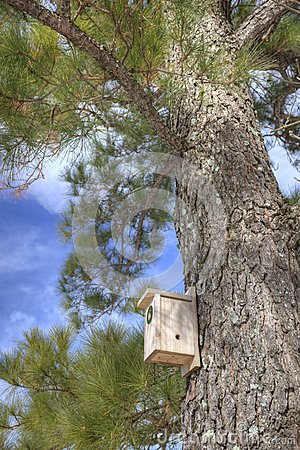 Birdhouse in pine tree