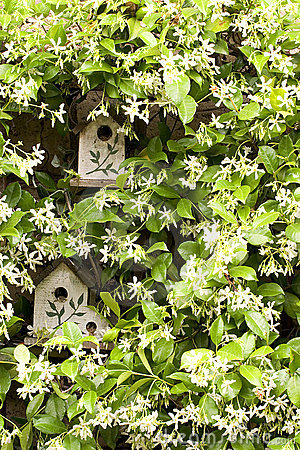 Free Birdhouse With Jasmine Royalty Free Stock Photos - 2355468
