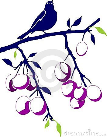 Birdie on a plum branch