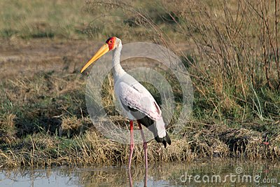 Birdlife in Botswana