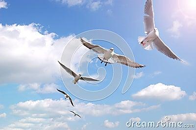Birds on air