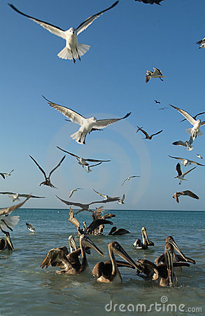 Birds on the beach of Holbox