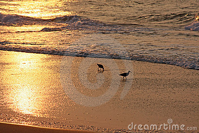 Birds on beach at sunrise